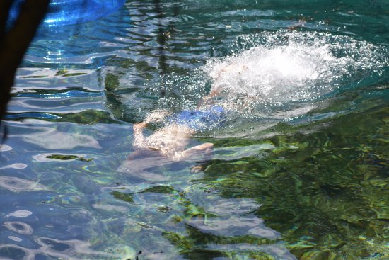 Chiefland, FL: snorkling the springs