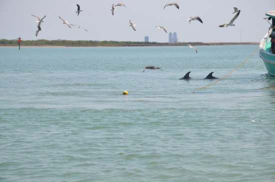 South Padre Island Dolphin Research And Sea Life Nature Center