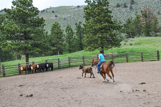 Livermore, CO: Team Penning, one of the most fun activities!