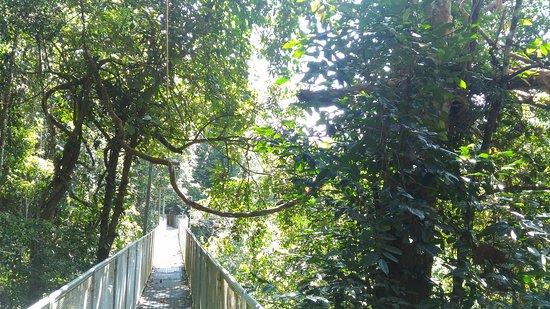 Kulim, มาเลเซีย: Sungai Sedim Recreational Forest