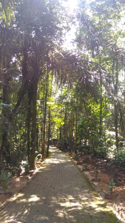 Kulim, Malasia: Sungai Sedim Recreational Forest