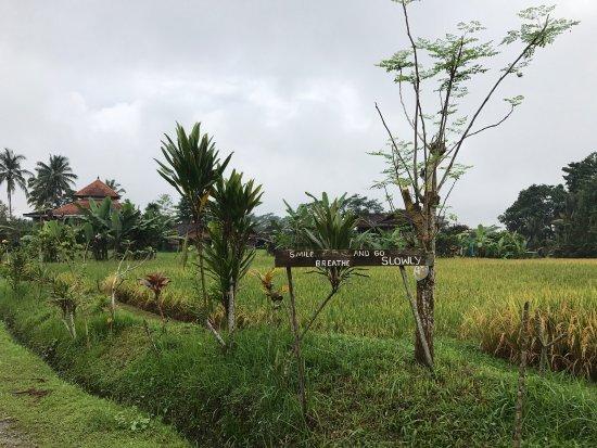 Penebel, Indonezja: photo0.jpg