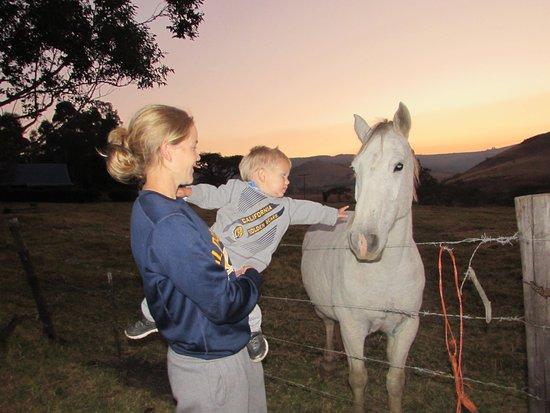 Van Reenen, แอฟริกาใต้: Friendly farm animals