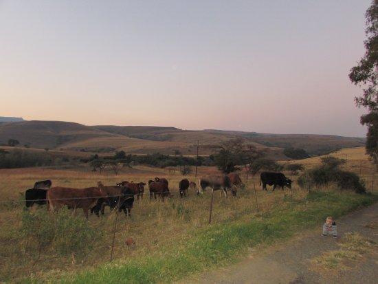Van Reenen, Afrique du Sud : Farm scenery