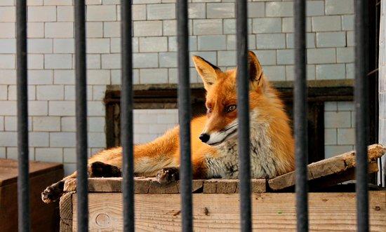 Nikolaev Zoo Photo