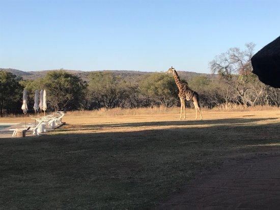 Waterberg, Güney Afrika: photo0.jpg