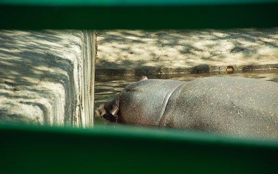Karaganda State Zoo: Бегемот спит