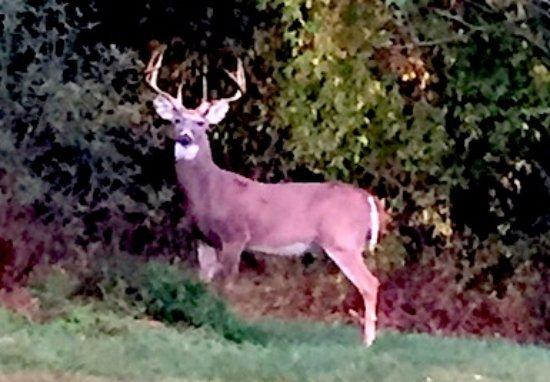 Collegeville, بنسيلفانيا: Evansburg Park Buck
