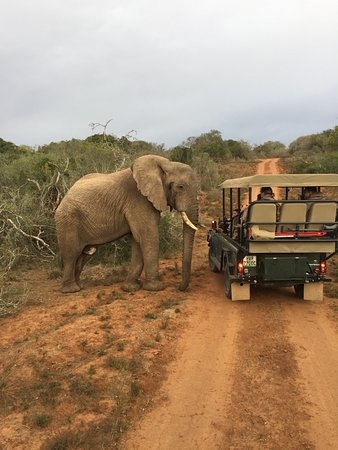 Port Elizabeth, África do Sul: Inquisitive elephants
