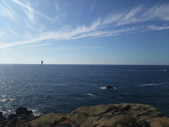 Hinomisaki Coast: DSC_2154_large.jpg