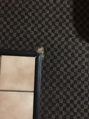 Travelodge Ukiah : Dirty, insect ridden slum