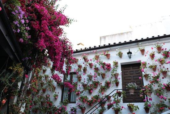 Foto de Los Patios De San Basilio