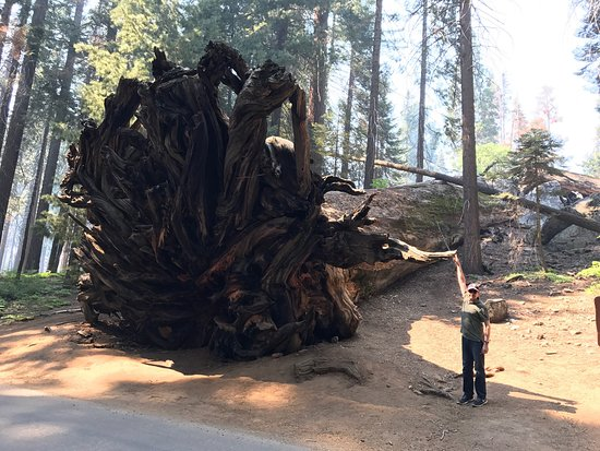 Three Rivers, CA: Sequoia and Kings Canyon National Parks