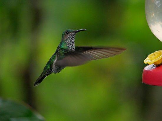 B&B Hotel Sueno Celeste: kolibri-3