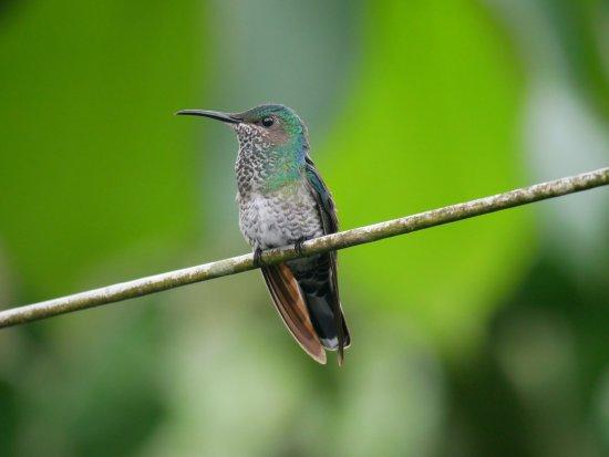 B&B Hotel Sueno Celeste: kolibri_4