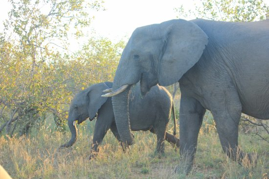 Bilde fra Balule Nature Reserve