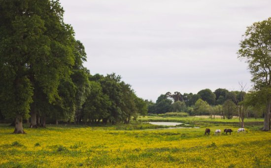 Clarencefield, UK: View of the neighbouring field (and horses) from the grounds