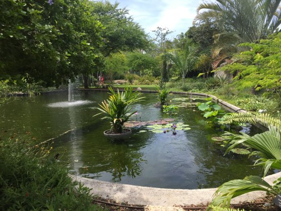 Miami Beach Botanical Garden: Lago.