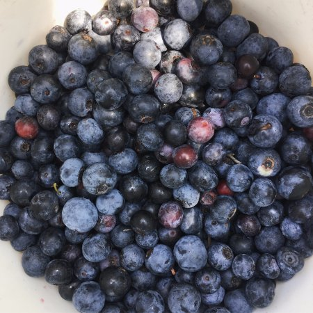 Conroe, TX: Blueberries