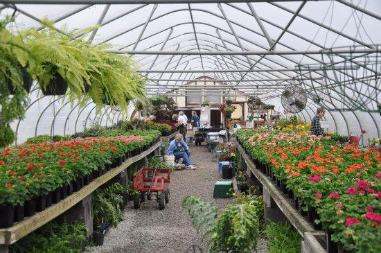 Green Houses 2016 Picture Of Huntsville Botanical Garden Huntsville Tripadvisor
