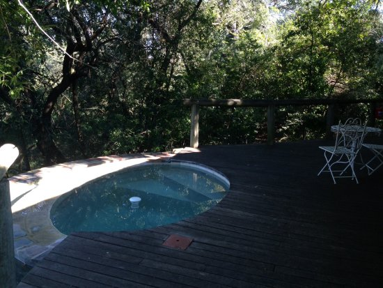 Manyeleti Game Reserve, Sudáfrica: Private pool which baboons sometimes frequent!