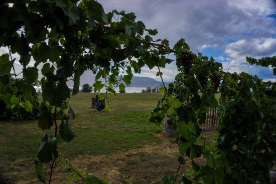 D'Angelo Estate Vineyard
