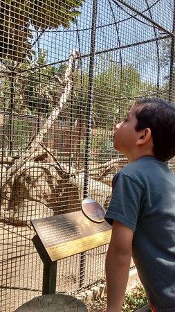 Santa Ana Zoo at Prentice Park Picture