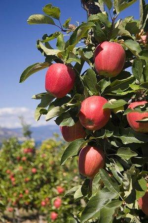 Playa del Sol Resort: Orchards