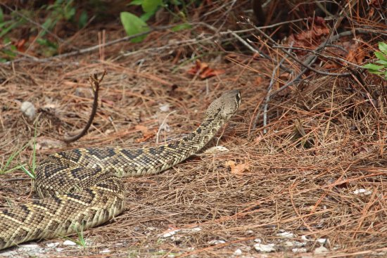 Saint George Island State Park: Cool find in the campground, never know what you will see