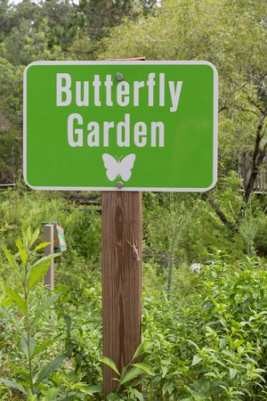 Enchanted Forest Sanctuary: Butterfly Garden