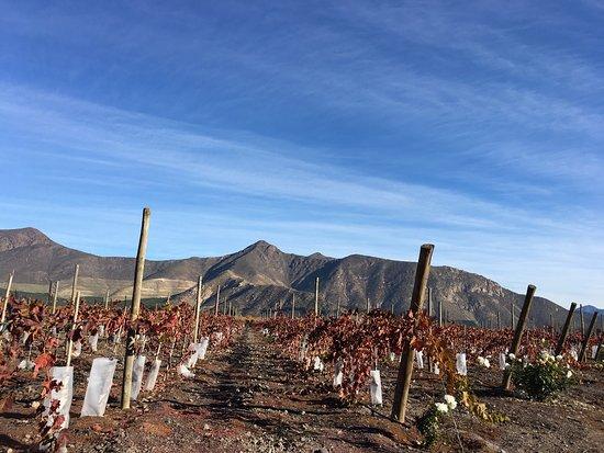 Vina Sanchez de Loria : Me encantó el servicio de Natalia, su amor explicando cada cosa de la viña, el paisaje hermoso y