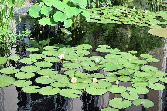 Kennett Square, PA: Water Lilly Garden