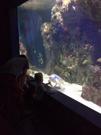 Aquarium picture of riverbanks zoo and botanical garden for Aquarium botanic