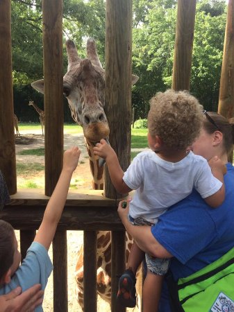 Riverbanks Zoo and Botanical Garden: Feed the giraffes
