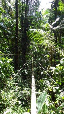 Tucanopy: Suspension bridge option.