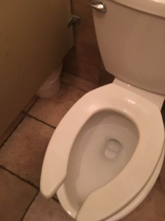 Laconia, NH: A toilet seat that moves 4 to 5 inches while trying to sit down is also gross.