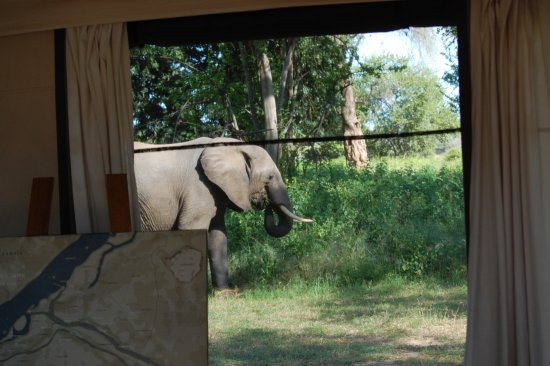 Wilderness Safaris Ruckomechi Camp: This one strolled through camp! (Seen from the lounge area.)