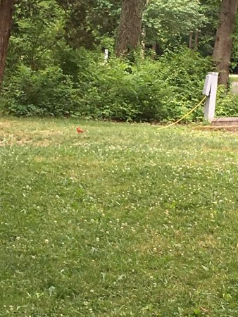 Pleasant Plain, OH: And wildlife abounds!