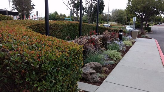 Milpitas, CA: Landscaping