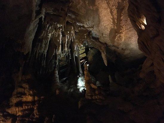Grand Avenue Tour Mammoth Cave Reviews