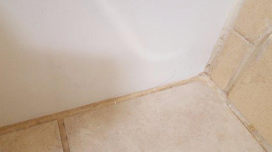 Gastonia, Kuzey Carolina: Long hairs found on dirty bathroom floor.