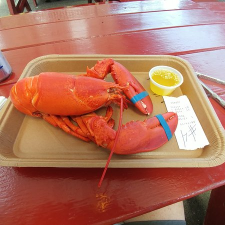 South Freeport, ME: Medium lobster - served with melted butter