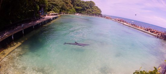 Dolphin Cove: The Lagoon where you interact with the Dolphins.