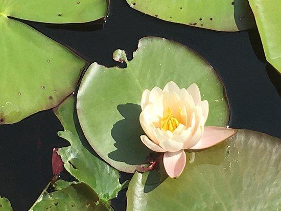 Kurozo Wetland
