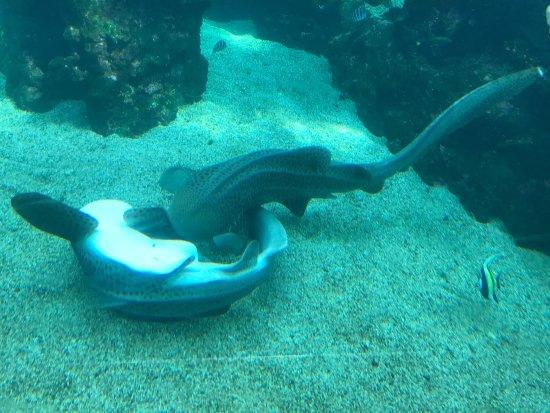 Aquarium des Lagons Nouvelle Caledonie: photo4.jpg