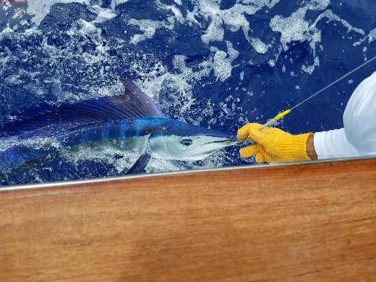 Huntress Sport Fishing: 123_1_large.jpg