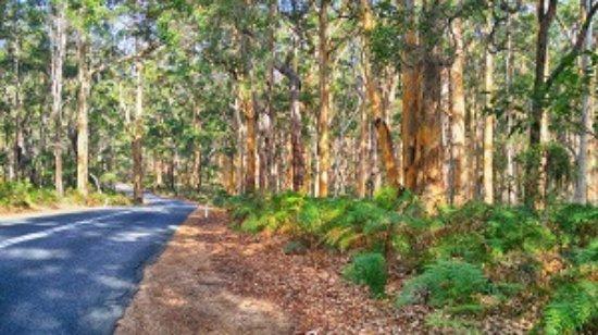 Scarborough, Australia: Karri Forest, South Western Australia, Margaret River Tour