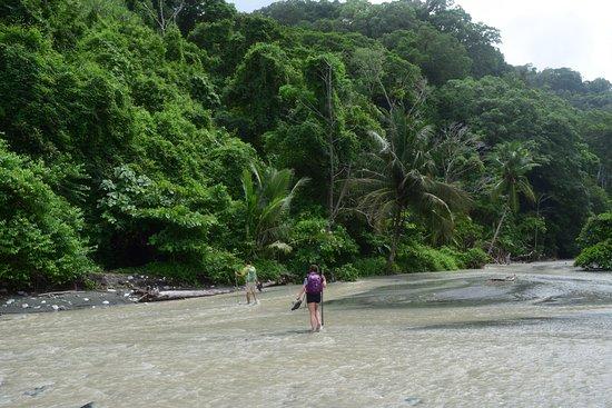 Puerto Jimenez, Kosta Rika: photo5.jpg