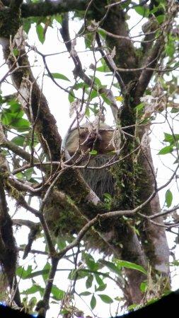 Monteverde Cloud Forest Reserve, Costa Rica: received_10155347397799906_large.jpg