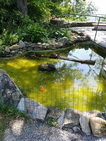 โบลวิงรอก, นอร์ทแคโรไลนา: Turtle pond.